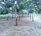 125 Perches Paddy View Land Sale in Handapangoda
