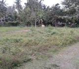 12.5 P Land for Sale in Negombo
