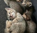 Kittens for A Kind Home