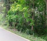 Rubber Land in Padukka