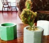 Desktop Pot