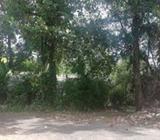 Land for Sale in Wickramasinghepura - L0561