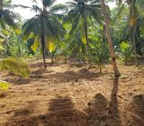 22 acres land for lease for a agriculture