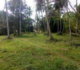 Land in Ibbagamuwa Gokaralla