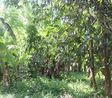 Land for Sale in Ambanwita, Gampaha.