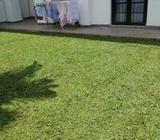 Malesian Green Grass