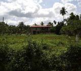 Land for Long Term Rent in Ja-Ela