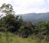 Valubale Land for Sale in Dambulla
