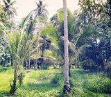 Valuable Coconut Land for Sale in Mamunuwa, Wariyapola.