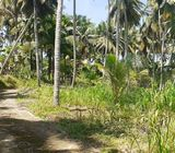 Well Cultivated Land for Sale at Rambukkana