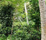 Valuable Land for Sale at Godakawela, Ratnapura
