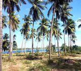 Land for sale in Kalpitiya