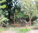 20 Perches Land for Sale at Ihala Imbulgoda. Gampaha.