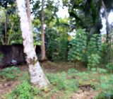 36 Perches Land with House for Sale in Orutota, Gampaha.