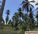 Coconut Estate for Sale