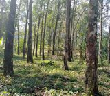 Rubber Land For Sale In sri lanka (Gampaha)
