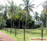 280 Perches Land for sale in Malwatte, Nittambuwa