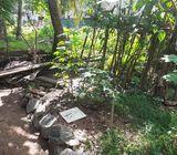 Sale Land in Kothalawala