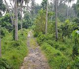25 ACRES COCONUT ESTATE FOR SALE MOLAGODA, PINNAWALA, KEGALLE