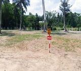 Valuable Land Blocks for Sale in Divulapitiya, facing Paddy field.