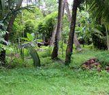 Land for Sale In Dagonna Minuwangoda.