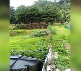 73 Perches Land for Sale in Nuwara Eliya