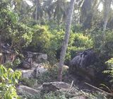 ELEVATED LAND WITH CINNAMON AND COCONUT CULTIVATION AVAILABLE FOR SALE