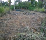 Land for sale in Pilimatalawa - Prime Royal Living