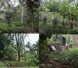 Nearly 3 acres cultivated land with colonial bungalow for sale