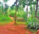 Kaludawela Up Land