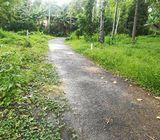 15 P. Flat land for rent– Imbulmalgama, Pilimathalwa.