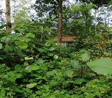 138 Perches Land at 9 th Mile post Igala, Elpitiya