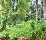 Land for Rent In Boralesgamuwa