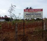 Organic Moringa Tree Farm