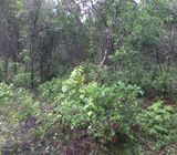 14 Acres Land for Sale in Habarana