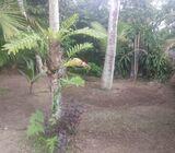Sri Lanka Negombo-Demanhandiya 80 perches with a house to Lease...