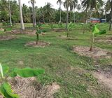 Valuable Property for sale in Pallama, Chilaw.