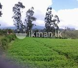 land for sale in