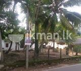 Lana facing Hansagiri road,