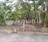 Land for sale in Kapuwatta
