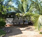 30 Acre Coconut Land in