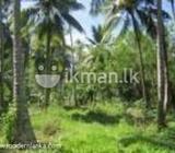 coconut land in Ja Ela