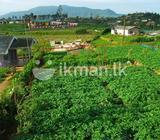 Land in Nuwaraeliya